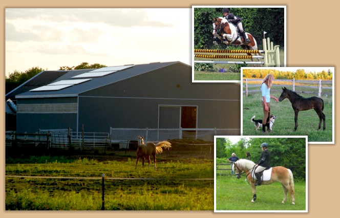 Aragon Equestrian Centre near Kingston Ontario Canada Boarding, Lessons, Horse Training, an Andalusian Stallion at Stud and Purebred and Partbred Andalusians for Sale.