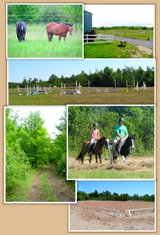 Aragon Equestrian Centre horse boarding,